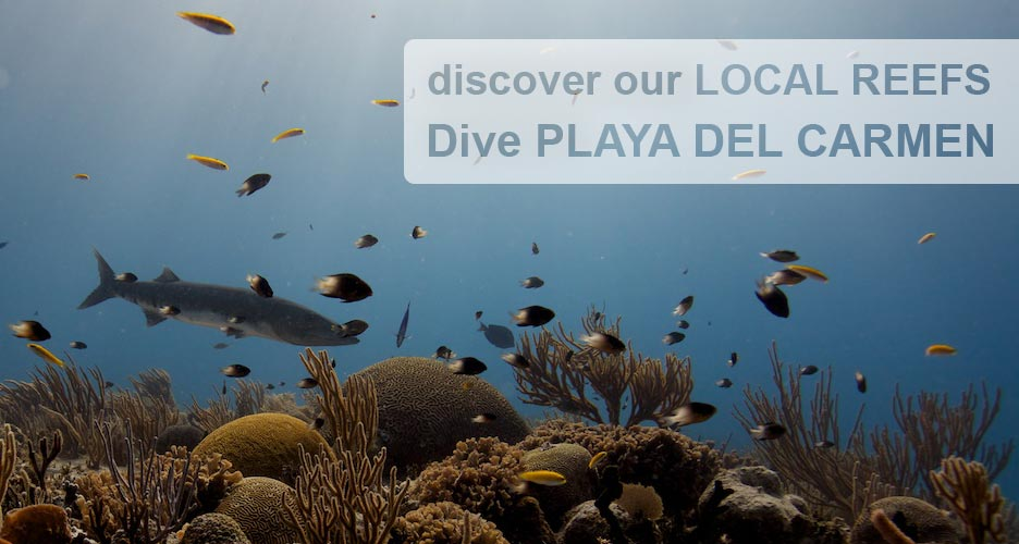 dive playa del carmen with deep deep down